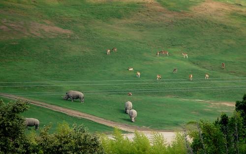 Rhinos and Gazelles