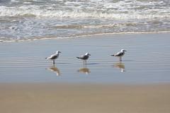 Seagull, seagull, seagull.