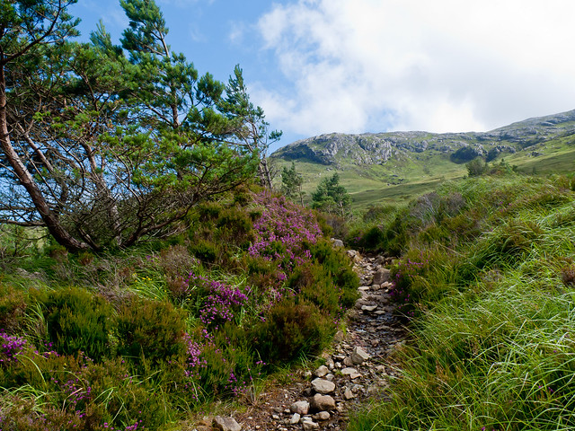 Stony path on the ascent