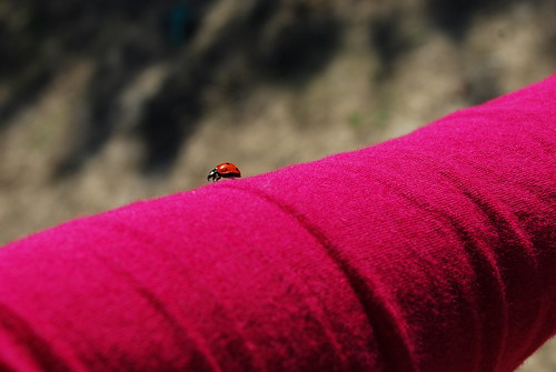 Happy Thing: Lady Bug Luck