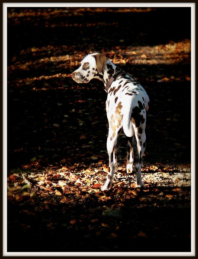 Castell Coch forest walk in Autumn