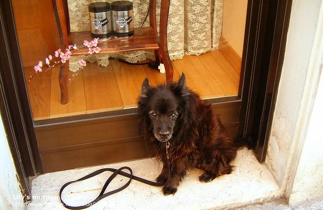 路邊的可愛狗狗,就這樣乖乖的等主人,不用拴耶...但這是什麼狗呢??我沒見過。@@