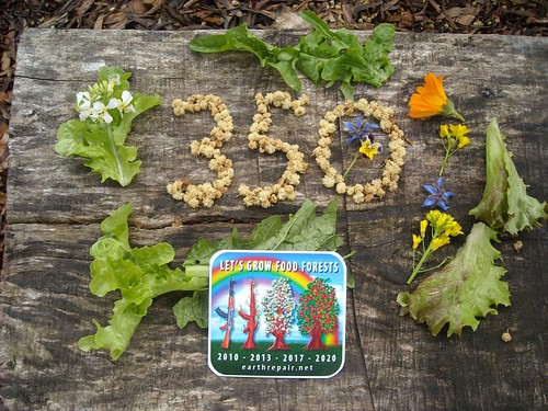 350 food forests