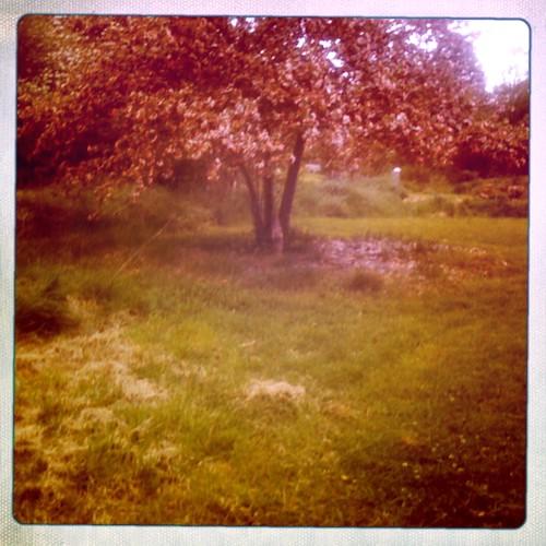 gardens_rain