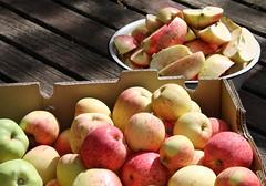 abundant harvest-local apples