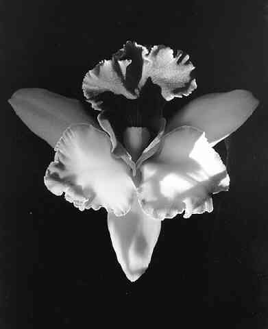 artwork_images_230_14233_robert-mapplethorpe