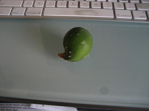 Sad cucumber 2