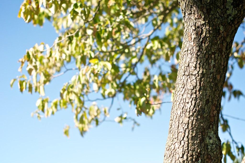 tree at maymont