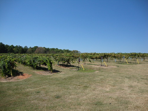 Wenker's Vineyard, Albertville AL
