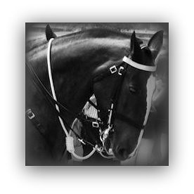Horse Cropped Podcast