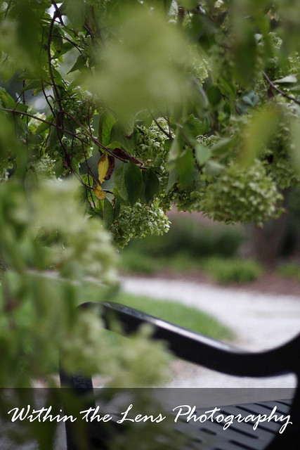 plants, parks, bench, flowers, green, black, photography, within the lens