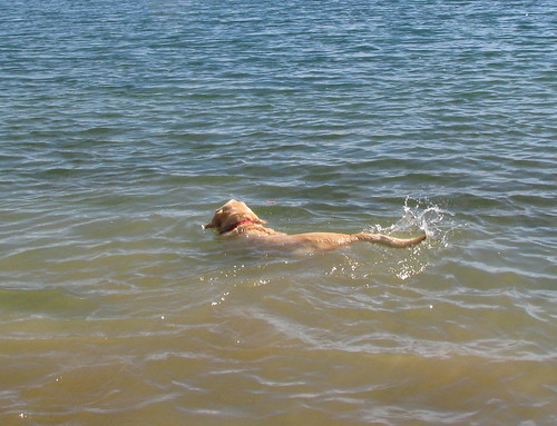 Sadie swims