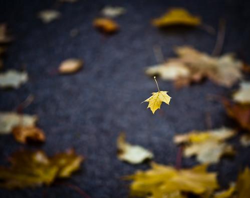 """Spinning & Falling"" - Fall Leaf Dance"