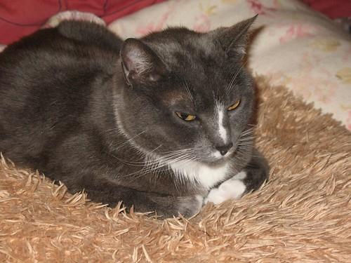 She loves her fuzzy pillow.