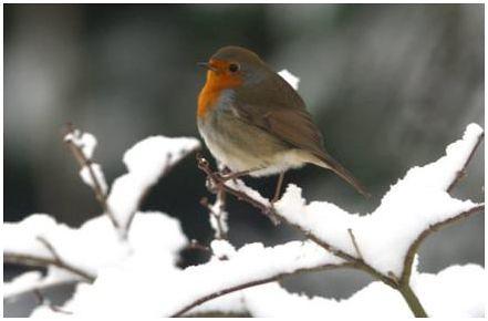 Bird and snow