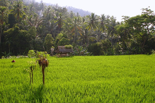 Trekking near Ubud, Bali