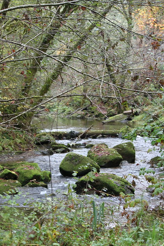 Salmon Spawning Stream, Central Coast Range, Oregon