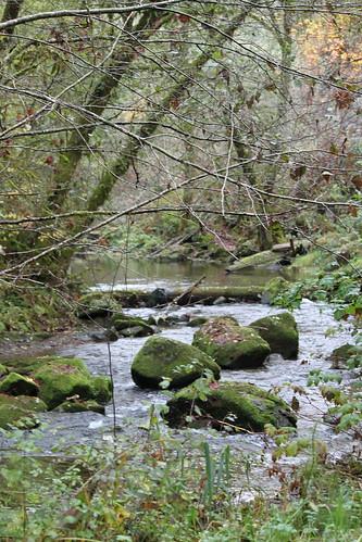 Salmon Spawning Stream, Central Coast Range, Oregon