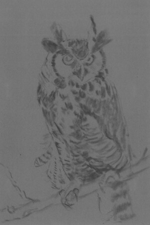 20101110_owl_step1