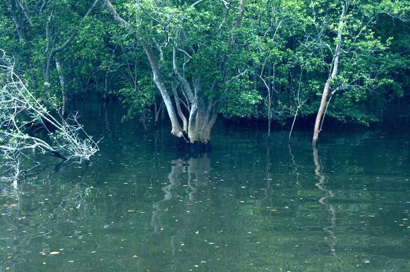 Sungei Buloh Reflections
