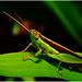 """Grasshopper #1 • <a style=""""font-size:0.8em;"""" href=""""http://www.flickr.com/photos/8038254@N06/4950579256/"""" target=""""_blank"""">View on Flickr</a>"""