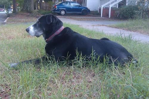 Herman outside! 10.04.2010 5