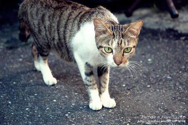 Cat。心念所至04.JPG