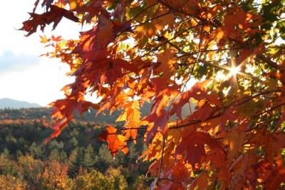 Autumn sunrise and leaves