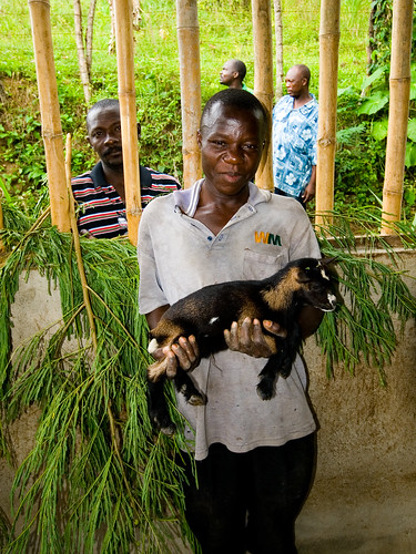 "Participant in semi-intensive ""cut-and-carry"" goat production model using soil conservation fodder production plots. Holding the first of the improved breed baby goats."