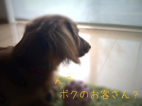 フォルテ(2010/11/14)