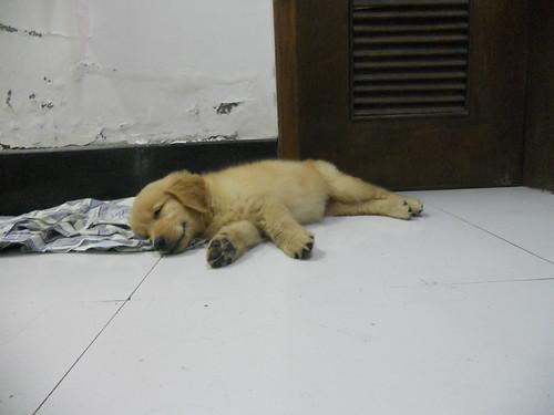 Whiskey naps