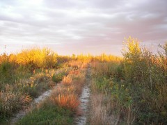 Golden hour:  Necedah Nat. Wildlife Refuge