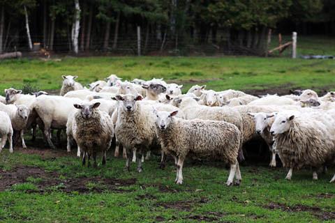 farm visiting