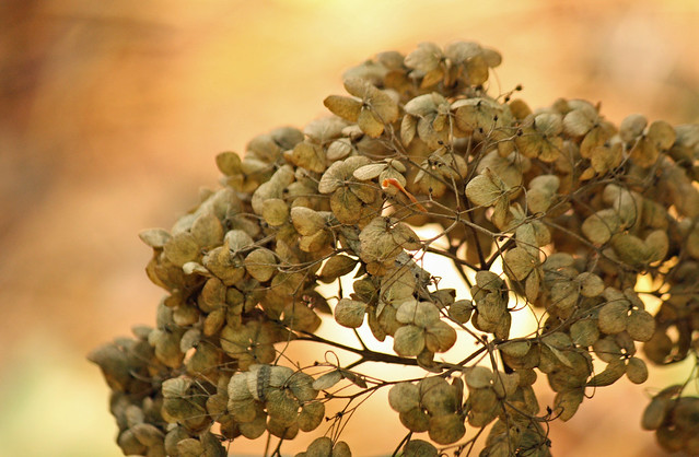 hydrangeadry - Picture Fall, Day 3