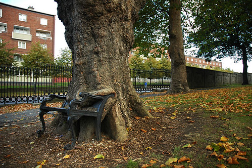 Swallowed Bench