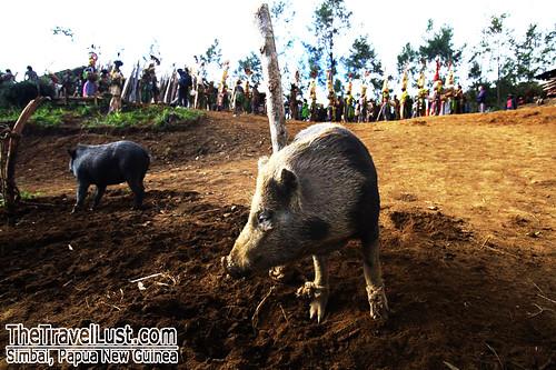 Kalaam Festival, Simbai, Papua New Guinea