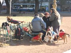 Dog Sitter Meet-Up