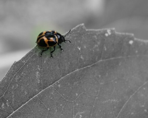 bug FOCAL