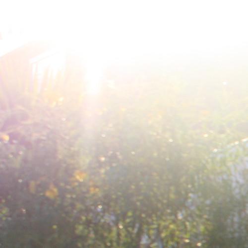 sun bushes
