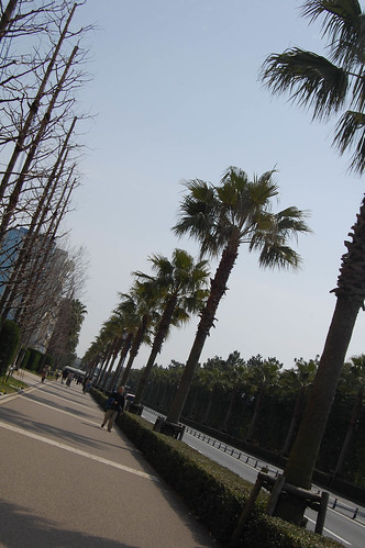 Pathway - look palm trees!
