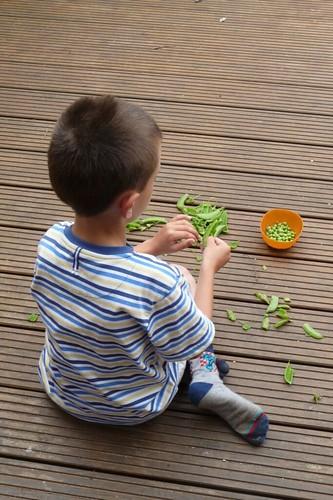 Podding Peas