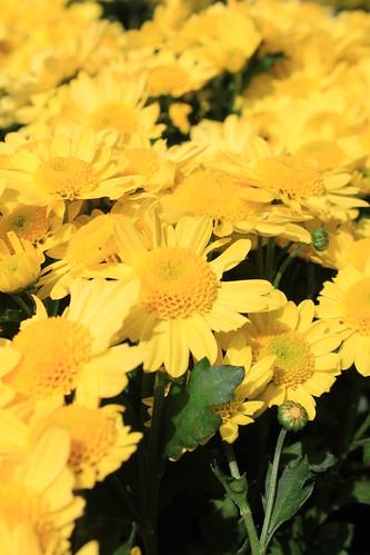 Gelbe Blumen.. by Fotomädel