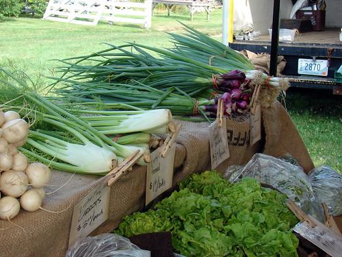 fennel, onions, leafy greens