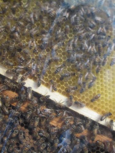 Bier på På Høyden