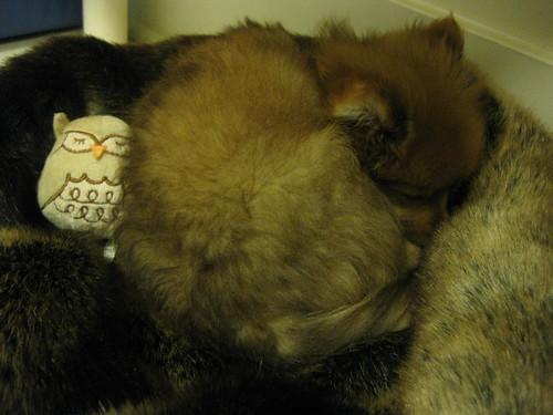 Georgie Sleeps