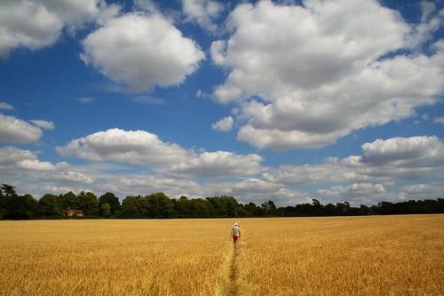 Herts Fields #2