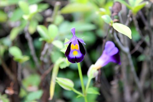 beautiful tiny flower