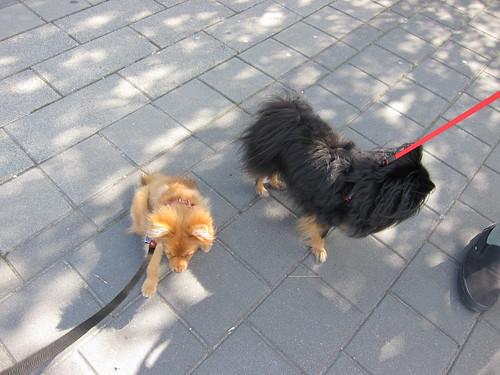 Georgie & Kichou on the Seawall