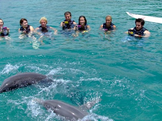 Dolphing Cove 1