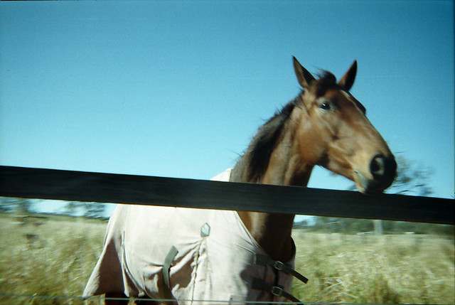 Hi horse.